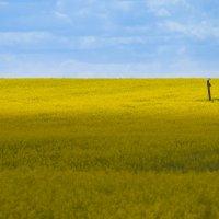 жёлтое :: Илья Костин