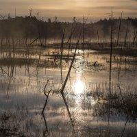 болотный туман, не похож на обман... :: Сергей