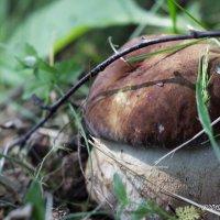 первый гриб :: Александр Чулков