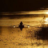 по золотой реке... :: Алена Рыжова