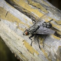 опять муха :: ник. петрович земцов