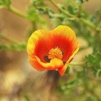 цветок :: Игорь Парицкий