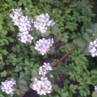 цветы :: Алена Васькова