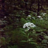 цветок :: Денис Масленников