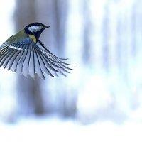 Полет синицы :: Анатолий Иргл