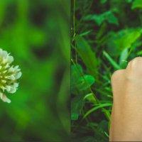 Цветы, лето, солнце)) :: Света Кондрашова