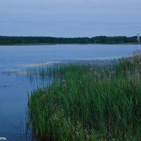 Вечернее Лебяжье  озеро. :: Виктор Евстратов