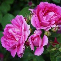 В саду :: Galina Belugina