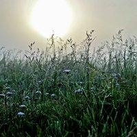 травы :: юрий иванов