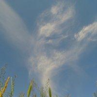 Небесный дух :: Алина