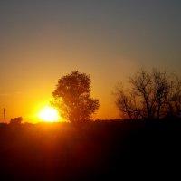 Солнце :: Miss Perfectness
