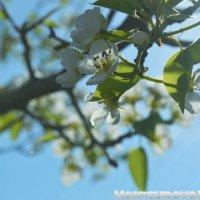 Весна :: Ксюша MF