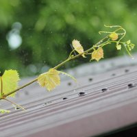 Когда идет дождь :: Marina K