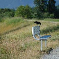 Вороны тоже любят посидеть на скамейке. :: Тамара Листопад