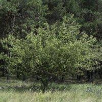 Другое дерево! :: Яков Реймер