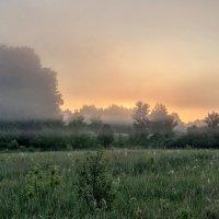 Июньским утром :: Виктор Позняков