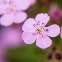 Макро цветочек) :: Tatsiana Latushko