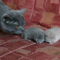 Как растут котята :: Алексей