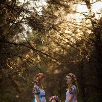 сказочный лес :: Римма Климова