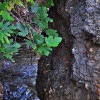 Природа :: aleks Faza
