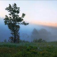 Про утро в лесу :: Сергей Шабуневич