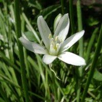 Белый цветок. :: Анатолий