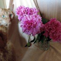 Да не трогаю я твои цветочки. :: bemam *