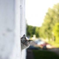 Сосед :: Илья Тимкин