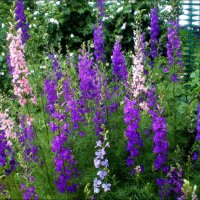 Летние цветы :: Татьяна Пальчикова