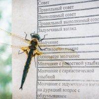 Прилетело насекомое, изучает прайс... :: Владимир Клещёв