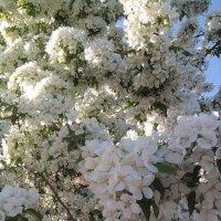 Весна :: fotolo555 Dan
