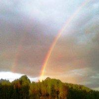 после дождя... :: Марина Харченкова
