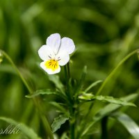 О, сколько их на полях! Но каждый цветёт по-своему – вот высший подвиг цветка! Мацуо Басё :: Dashiki