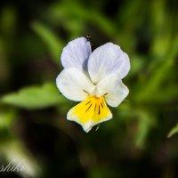 «В быстро вянущих лепестках цветка больше жизни, чем в грузных тысячелетних глыбах гранита» :: Dashiki