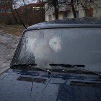 сигнализация от шарика... :: Алексей