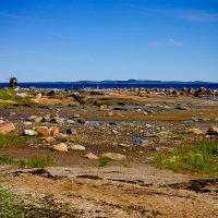 Белое море :: Валентина Ломакина
