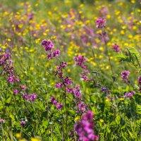 Цветы на поле :: Денис Матвеев
