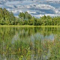 Кусочек озера :: Дмитрий Конев