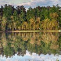 Лесное озеро. :: Александр Селезнев