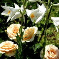 Лилии и розы... :: Тамара (st.tamara)
