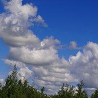 Ветер крутит облачка. :: Антонина Гугаева