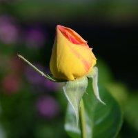 Цветы :: Lyudmila Pendelya