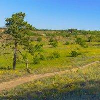 Около леса :: Юрий Стародубцев