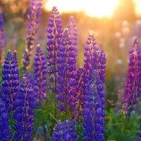 краски лета :: Седа Ковтун