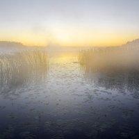 Озеро.Предутренний туман :: Валерий Талашов