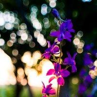 Flowers :: Сергей Сиваш