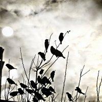 Слушая песню ветра :: Катерина Чебышева