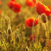 Ангельские цветы :: Swetlana V