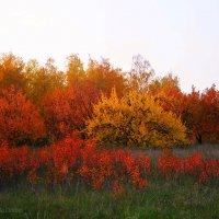 Осенние краски :: Дарина Колода