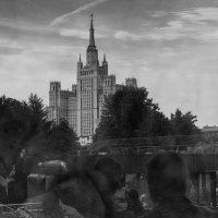 пингвины Гумбольта покоряют Москву :: Максим Должанский